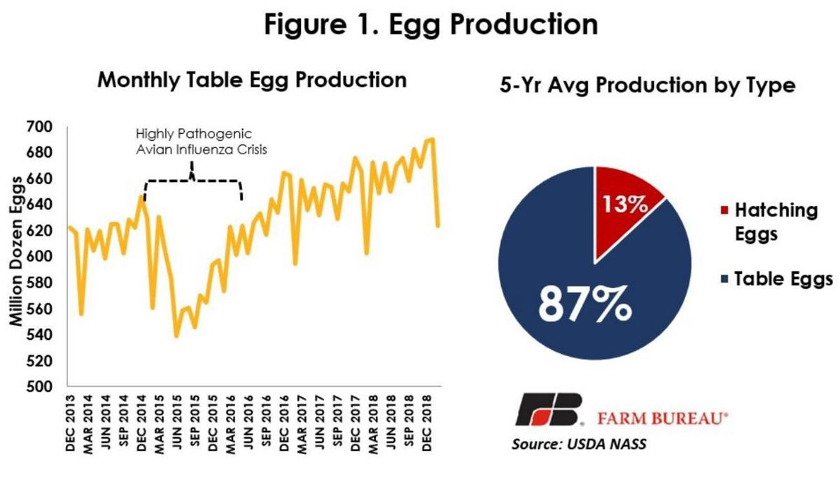 Egg Production | | agupdate com