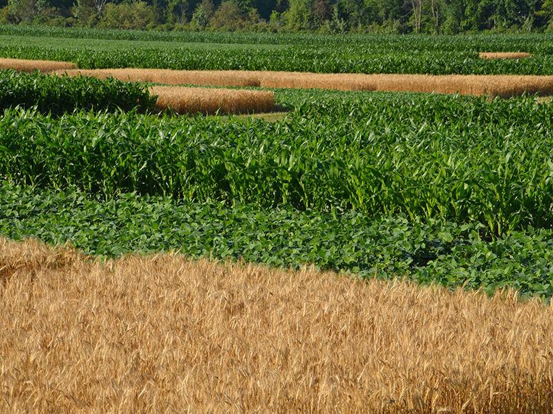 Crop-rotation trial