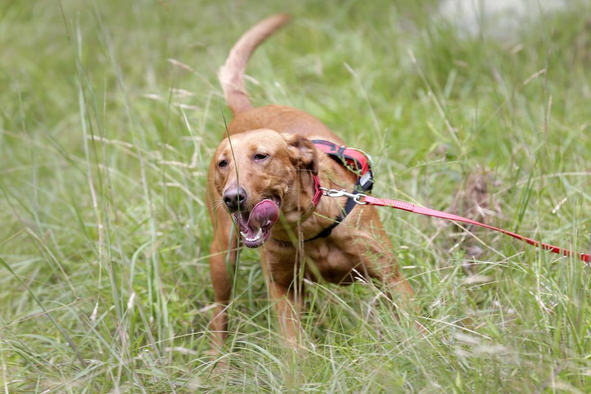 Invasive Plant Dogs