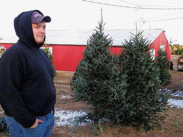 Tyler Kasl cut Christmas trees Fraser firs