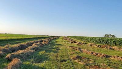 alfalfa hay field in central North Dakota
