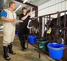 Dairy-calf vaccination