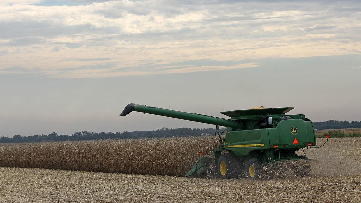 Late afternoon combine corn