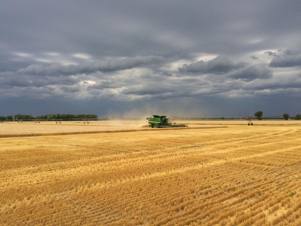 Combining the Leidenix contest field as a storm approaches.