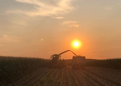 Sunset silage chopping