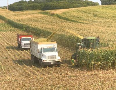 Silage chopping