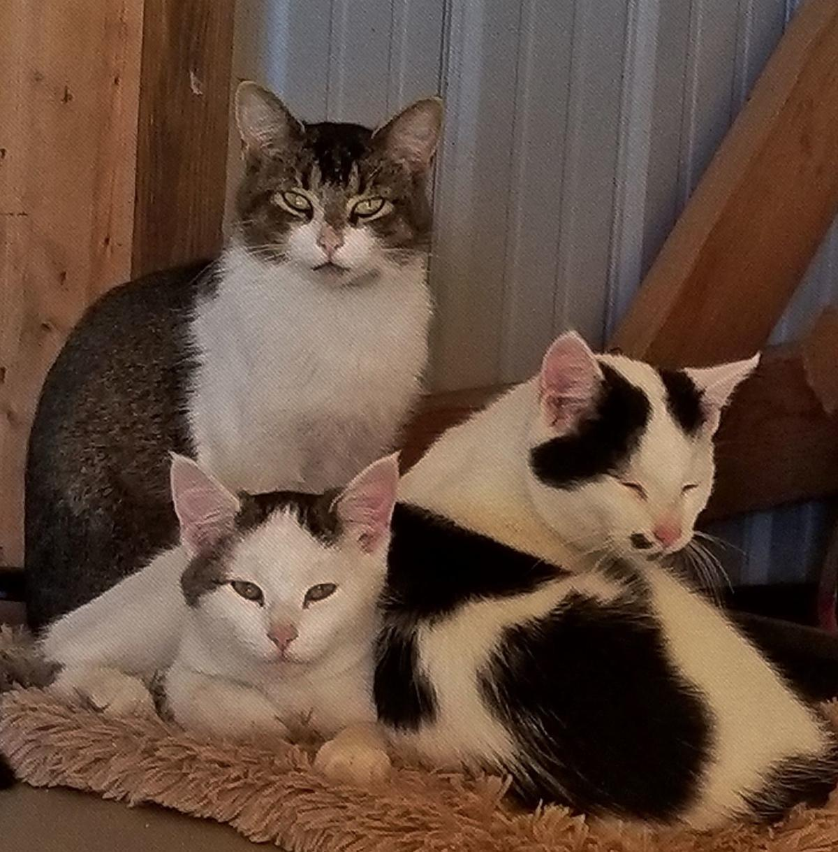 Olive, Milo and Hazel