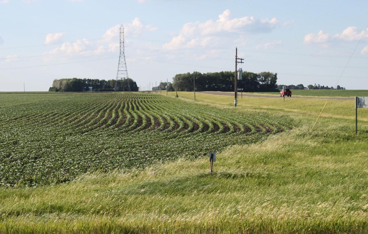 Crop conditions Western MN June 10-15, 2020