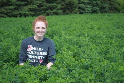 Alfalfa harvest begins across Stearns County | Crop News: Forages