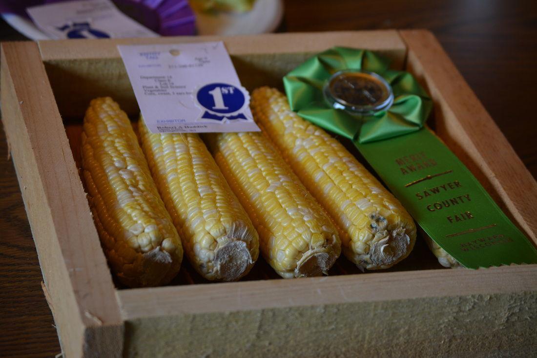 Award-winning corn -- Sawyer County Fair