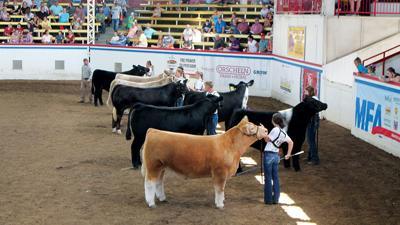 MO livestock fair exhibit