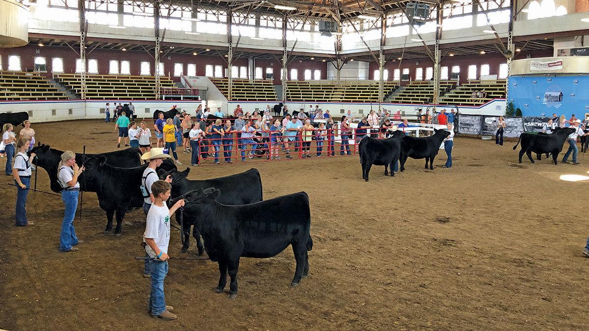 Missouri State Fair cattle show