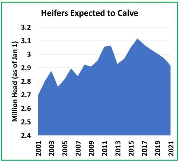 Heifers Expected to Calve