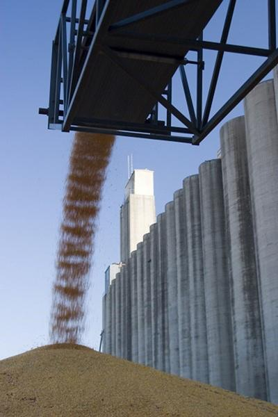 Corn pours onto pile at elevator