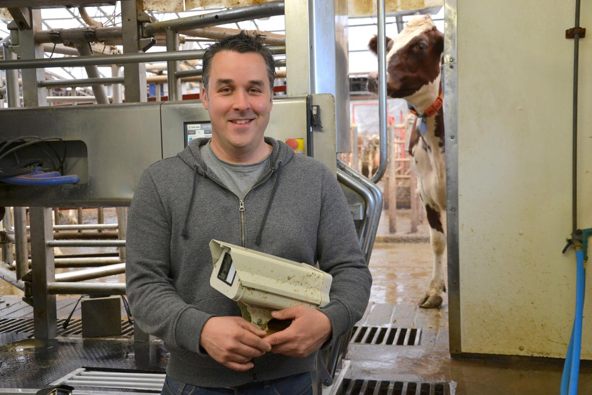 System detects early udder infections   Business ...