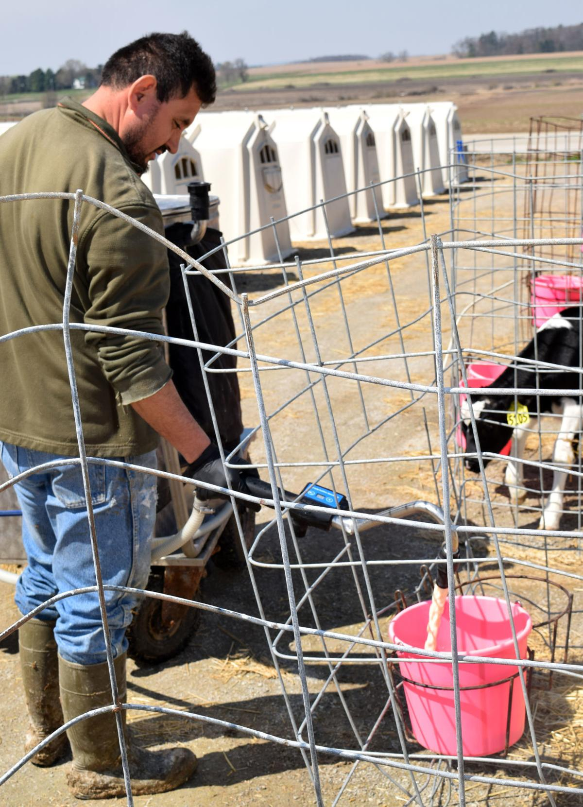 José Martinez feeding calves milk replacer
