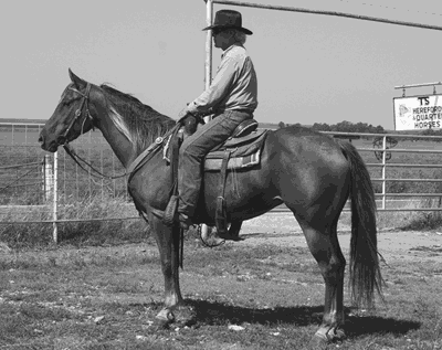 Congenial, grinning, just a bit ornery, always a cowboy first and foremost