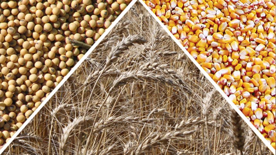 Corn soy wheat market graphic