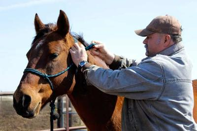 Iowa Master Equine Manager Program - Horse Care