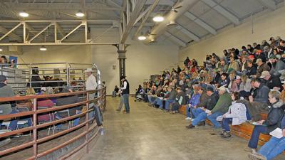 Illinois Performance Tested Bull crowd