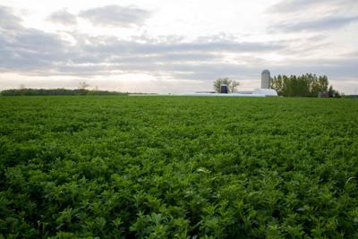Agronomy -- Forages -- Alfalfa