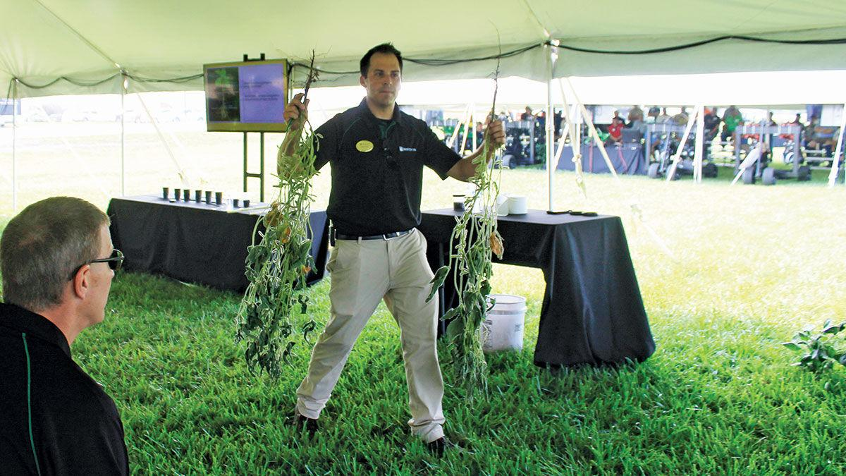 Nate Firle compares two soybean plants
