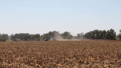 Grazing cornfields after harvest