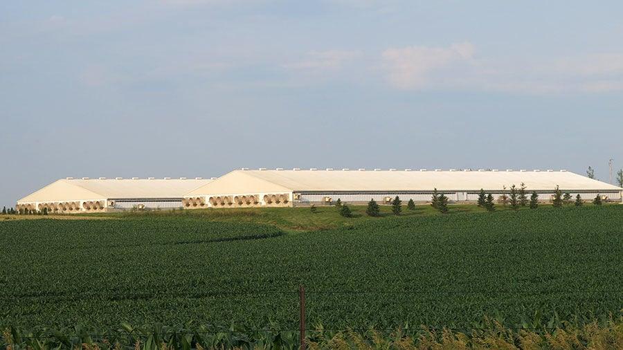 Hog building next to field