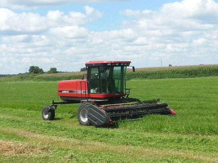 Cutting meadow hay