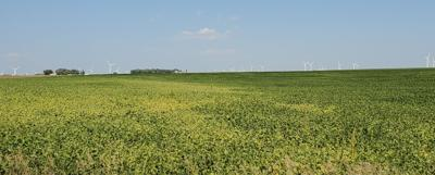 Nieuwenhuis crop deteriorating