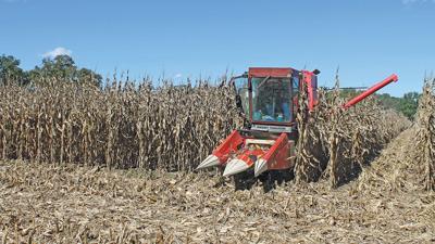 harvests a corn test plot in northeast Missouri