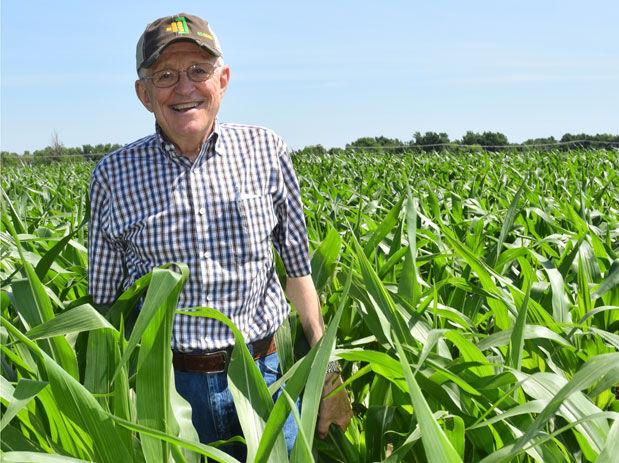 Woster corn field