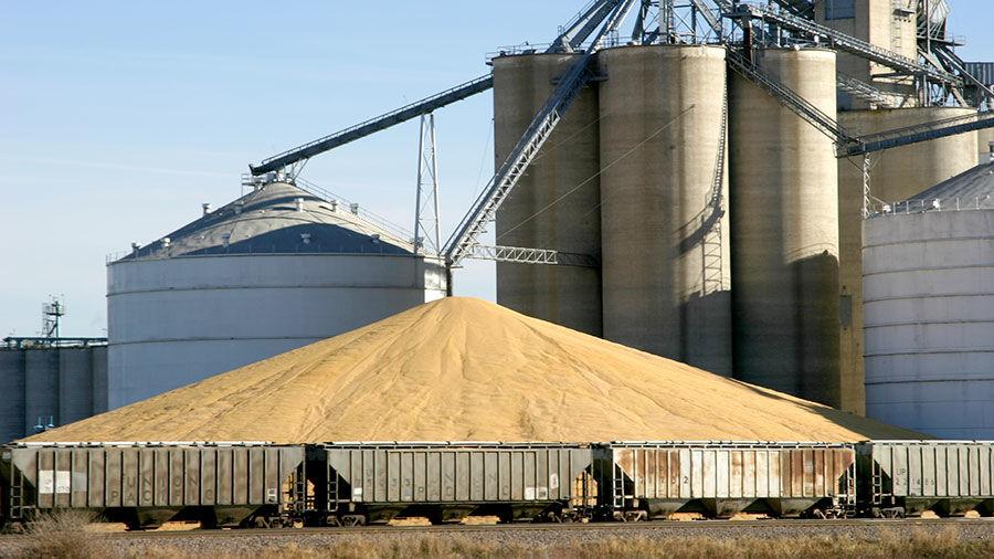 Grain surplus