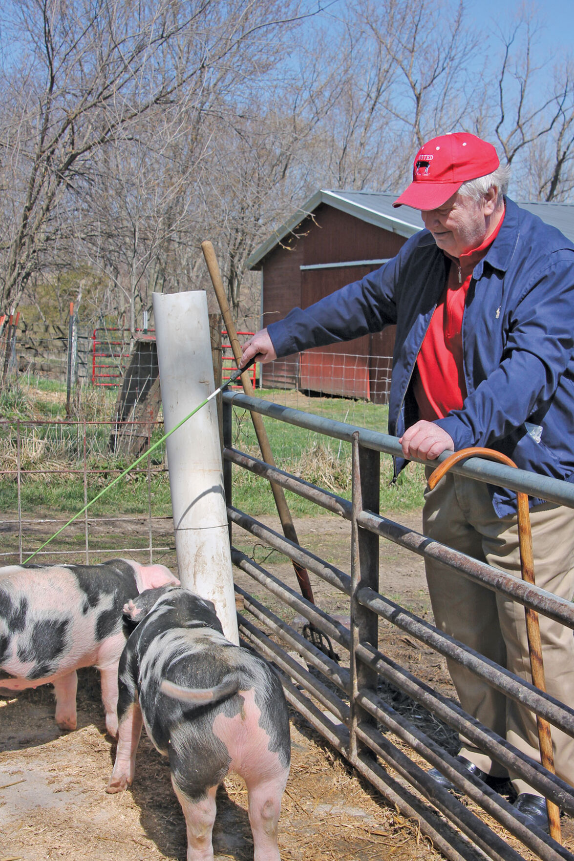 Rod Fee with pigs