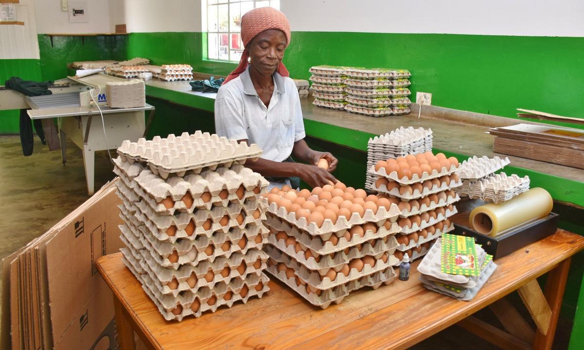 Employee packs eggs