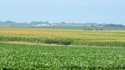 Corn soybean filed photo