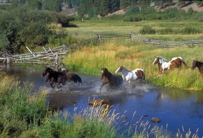 Equine landscaping