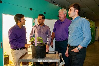 K-State researchers to track water movement in plant stems