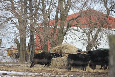 Hay cattle feeder