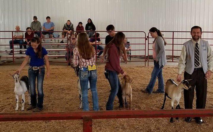 Livestock showing -- Juneau County Fair