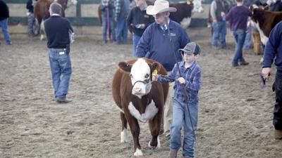 Beef expo file 2018