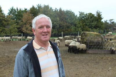 Martey Stewart with sheep