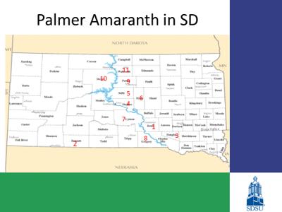 Palmer amaranth South Dakota