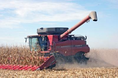 sd corn yield winners