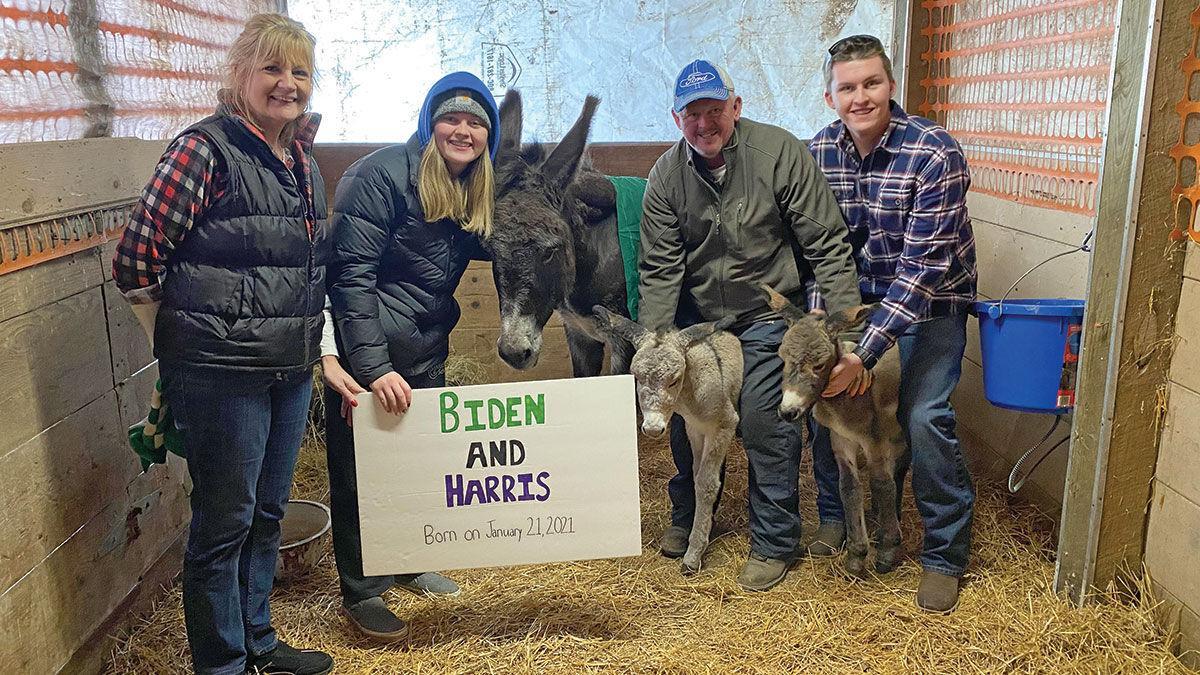 twin donkeys, Biden and Harris,