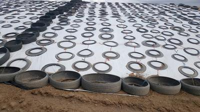 Used tires secure plastic around the silage pile.