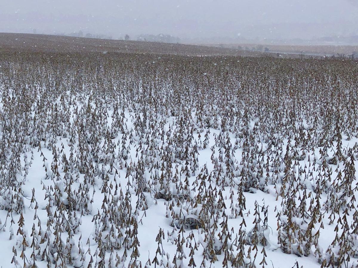 Snow falls on harvest Oct. 31, 2019