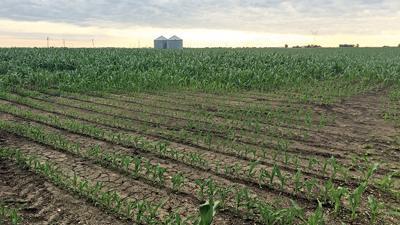 July 1 crop prevent plant