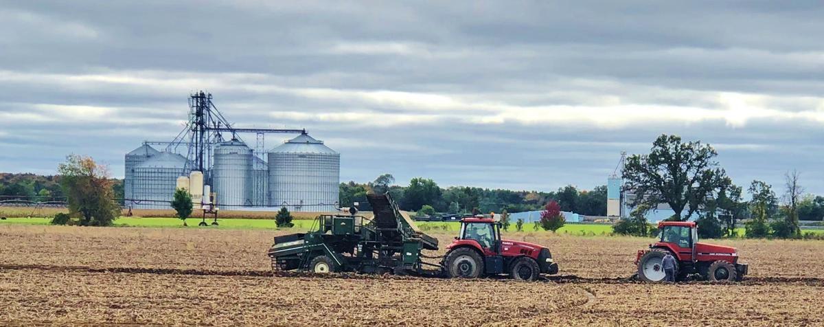 Producers attempt potato harvest