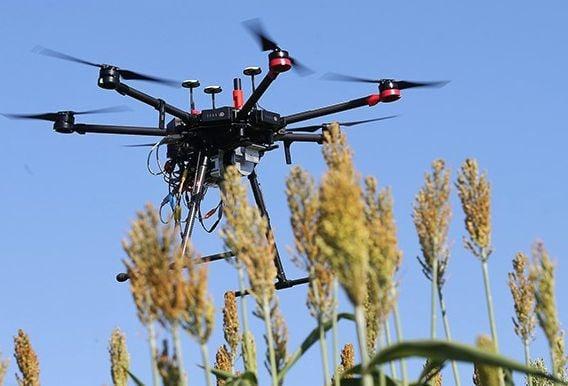 Unmanned-aerial vehicle above sorghum